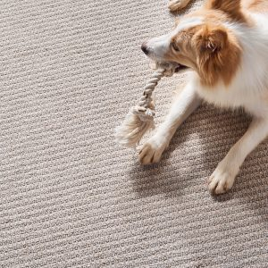 Dog on Carpet | Design Waterville