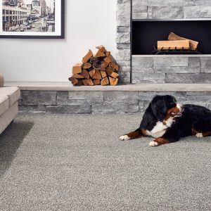 Pet friendly Carpet | Design Waterville