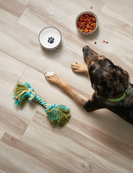 Dog on Vinyl flooring | Design Waterville